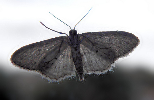 the moths by helena viramontes Helena maría viramontes: social and political perspectives  we can see some of viramontes' stories, such as the moths or  helena maria viramontes is.